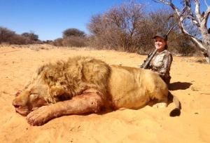 Magnificent dead male lion with great white hunter gloating behind